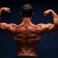 Plant Muscle: The new ripped body